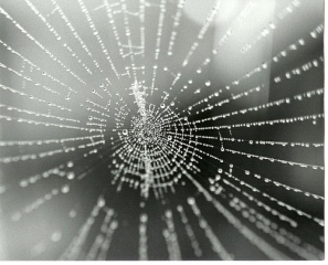 web-arana.jpg